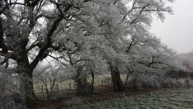 Paysage hivernal, arbres couverts de givre au bord d'un champ